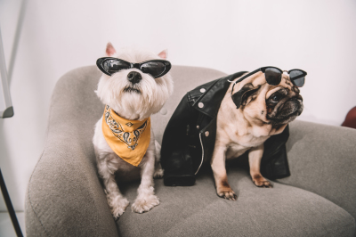 Millennials are buying homes because of their dogs