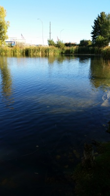 Aquatic Weed Control for Ponds & Lakes