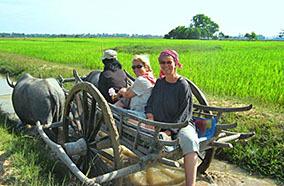Siem Reap Oxcart Ride