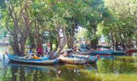 Kampong Phluk Mangrove