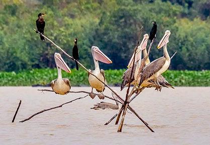 Boeng Pearaing Bird Sanctuary