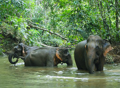 Mondulkiri Elephant Family