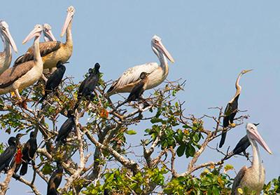 Prek-Toal-Bird-Sanctuary-02-400x278.jpg