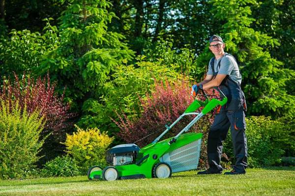 Tips for Choosing a Professional Lawn Care Company