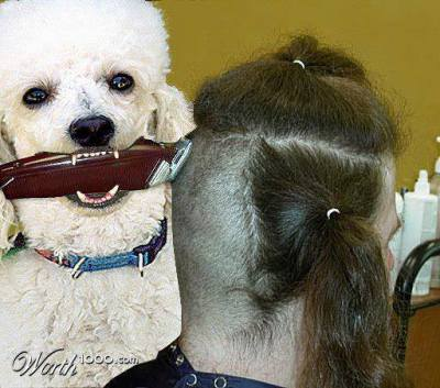 How To Get The Haircut You Want At The Groomer