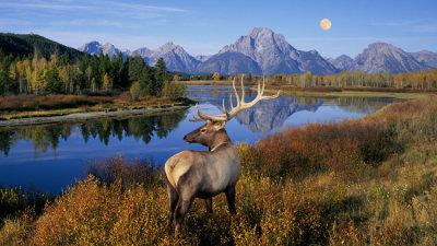 Yellowstone & Grand Tetons
