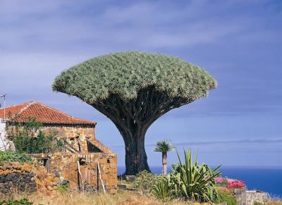 Tenerife excursions - coach tours to Teide, Masca, dragon tree, lava pools