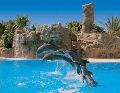 loro park, tenerife, zoo, loro, tickets online, buy, free bus, shuttle bus, puerto de la cruz, bus service, dolphins, show, entrance