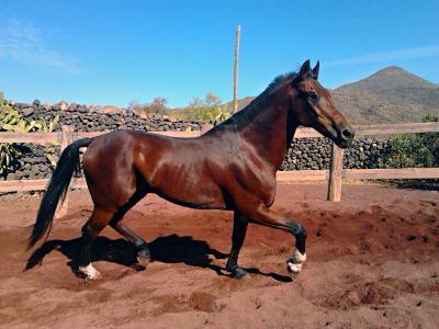 horse riding tenerife, tenerife, horse