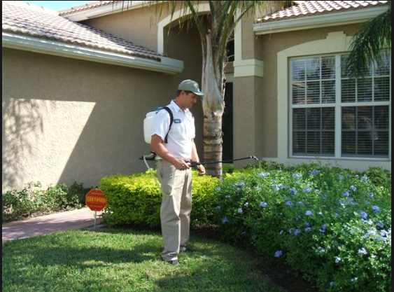 Why You Need the Best Pest Control Company