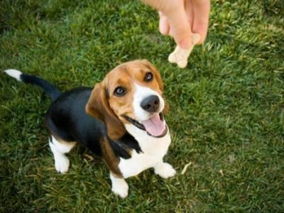 Choosing the Best Dog Treats
