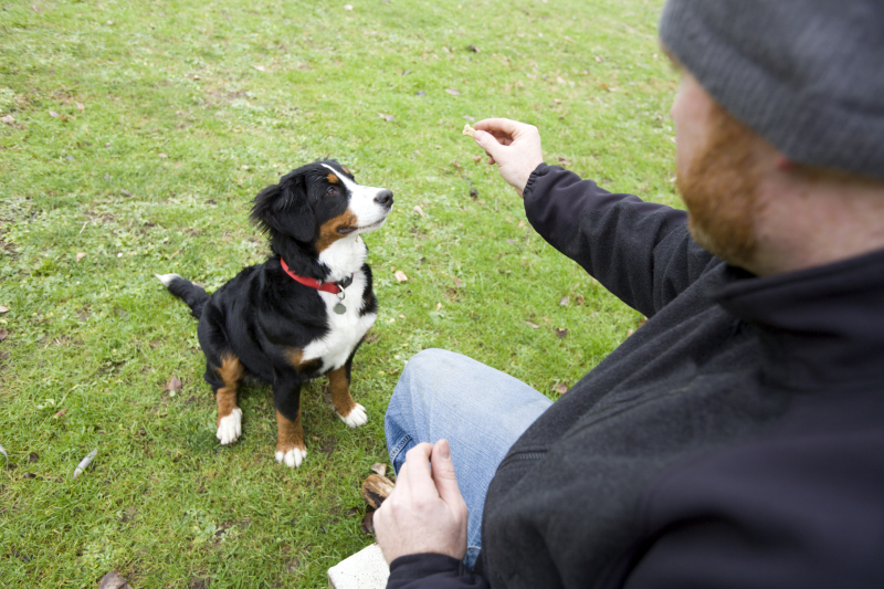 Getting the Right Treats for Your Dog