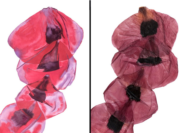 Edith Hillinger    I    Doubletake-Four Vertical Poppy Petals    I    41.5  x 30    I     Watercolor and Digital Archival Pigment Print on Paper    I    $4,000