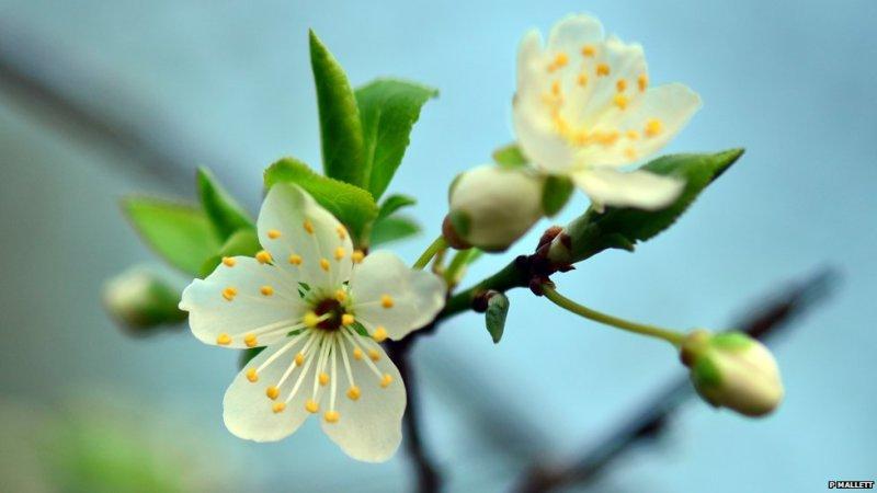 Atz'umaank - to flower, bloom, blossom