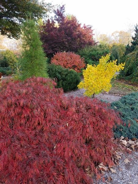 Fall Garden Scene