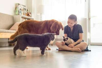 Quality Health and Wellness Products for Pets