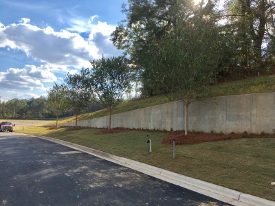 Landscape & Irrigation