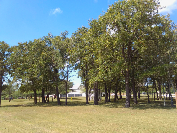 Activity center view through trees
