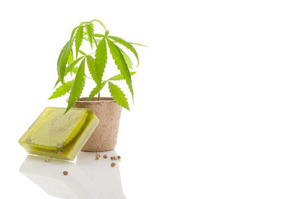 Medical Marijuana and the Advantages of its Use