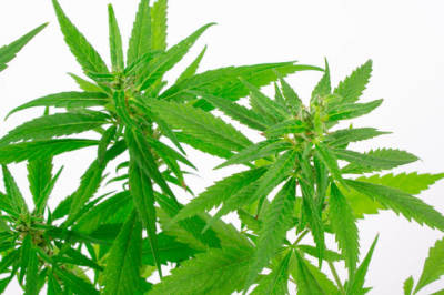 Get to Recognize Some of the Benefits of Medical Marijuana
