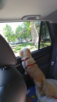 I love to look out the window...don't worry... I'm securely buckled in.