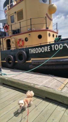 I'm at the Halifax Waterfront...check out Theodore the tugboat behind me !