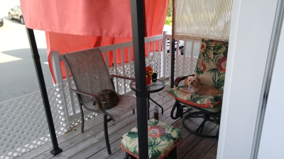 My sister cat, Picotine, and I enjoying the fresh air.