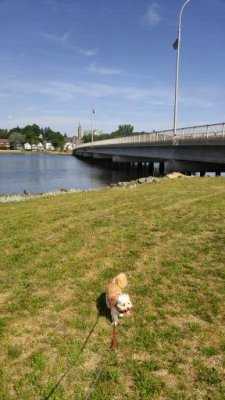 Along the Veteran's Bridge, Bathurst, NB Canada