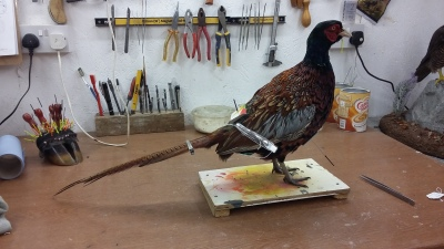 Pheasant Commission