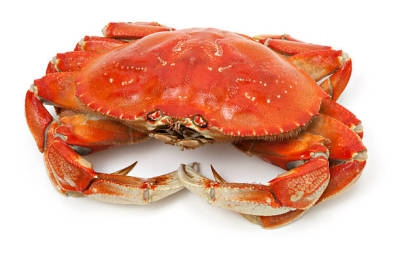 Tips on Buying the Best Crab