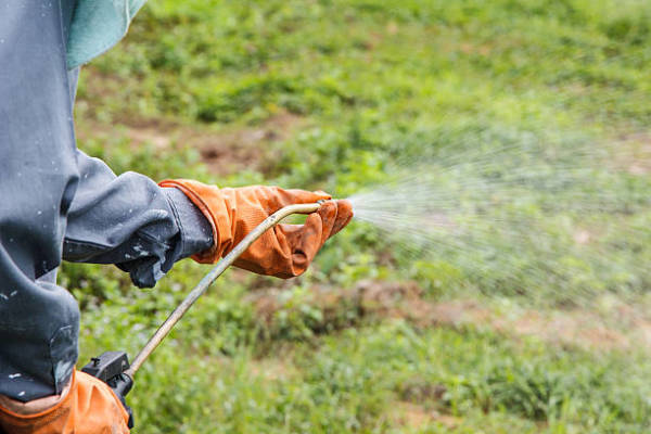 What You Should Know About Lawn Pest Control