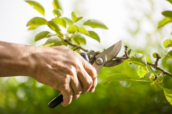 This is Things to Consider Before Hiring a Tree Service