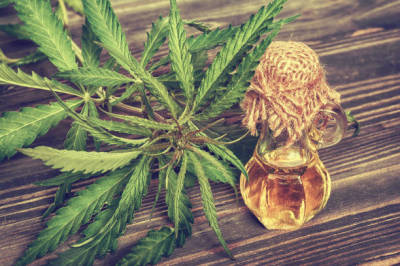 Uses of CBD in Pain Treatment