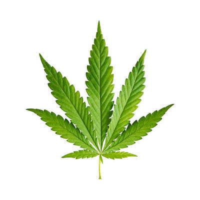 Factors to Comprehend about CBD in the Medical Field