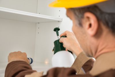 Factors To Think When Selecting A Termite And Pest Control Service