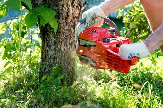 Tips for Hiring a Tree Removal Company