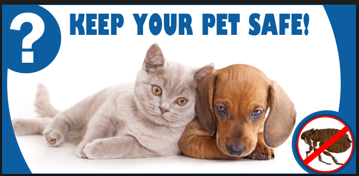 Buying the Best Pet Products