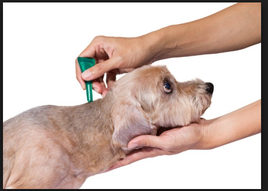 How to Choose the Best Flea Medicine for Your Pet