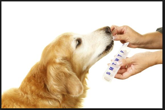 Advantages Of Pet Products