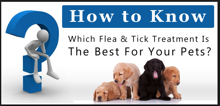 A Guide to Purchasing Pet Products over the Internet