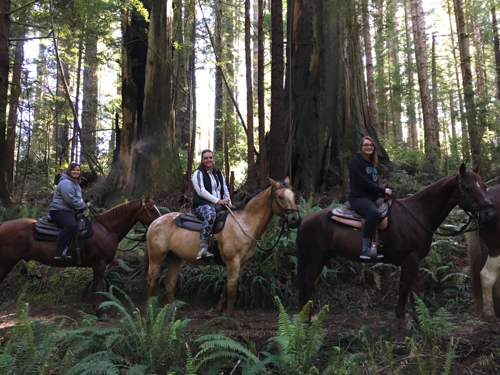 Rides In The Redwoods