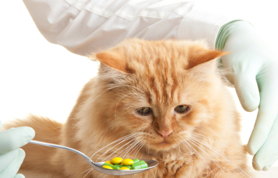 What you should know about Pet Pill Pockets