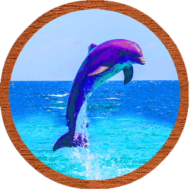 The characteristics of the dolphin as a spirit animal.