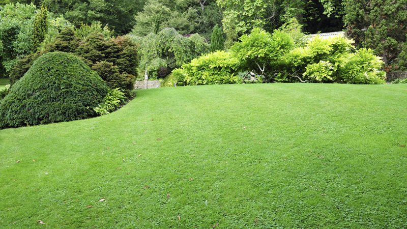 Factors To Consider When Choosing Lawn Maintenance Company