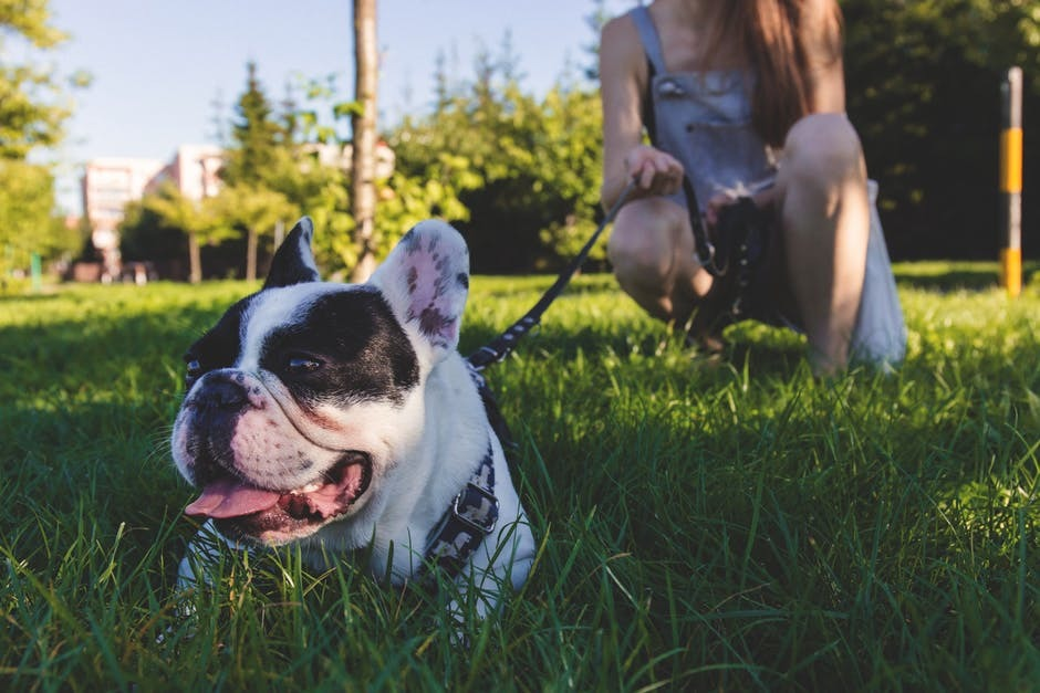 How to Keep Pets Comfortable During Travel