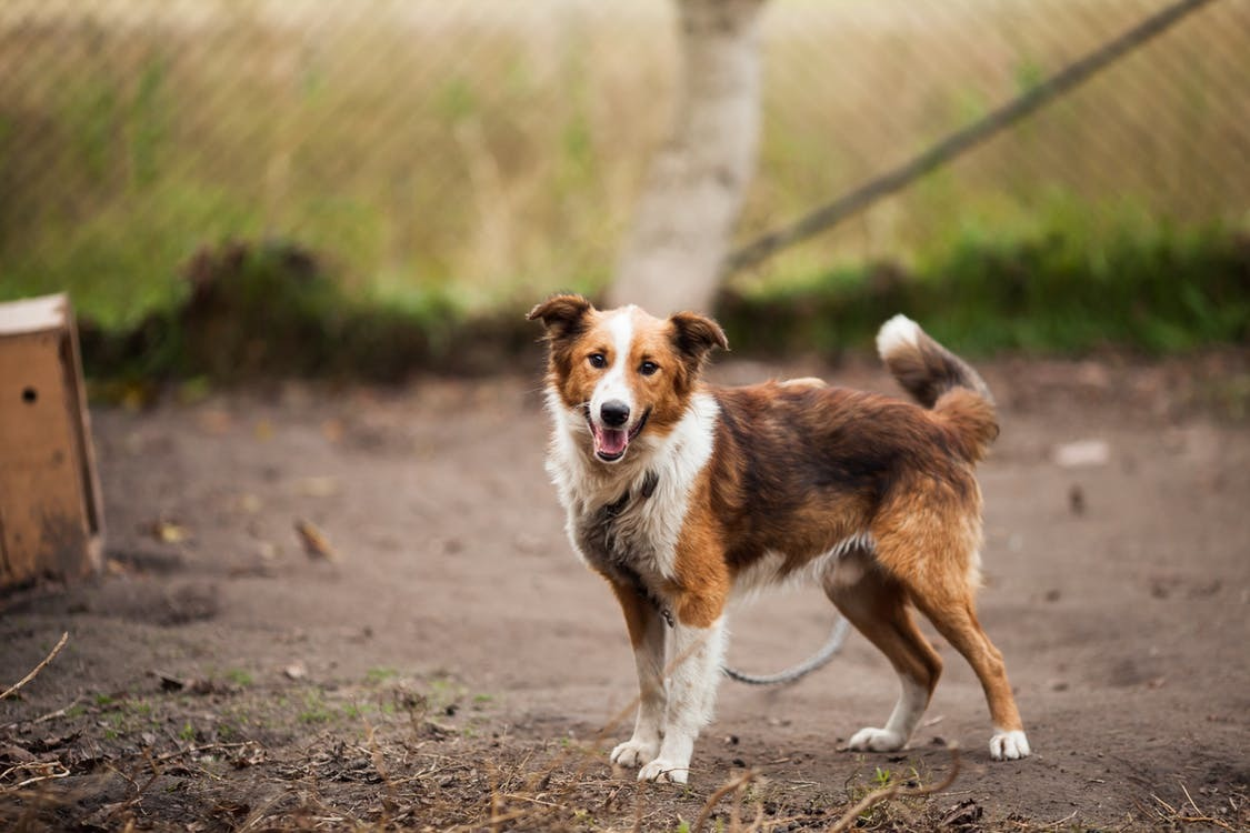 Basic Gear Needed to Train Your Family members Dog