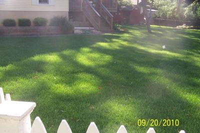 New Sod back lawn