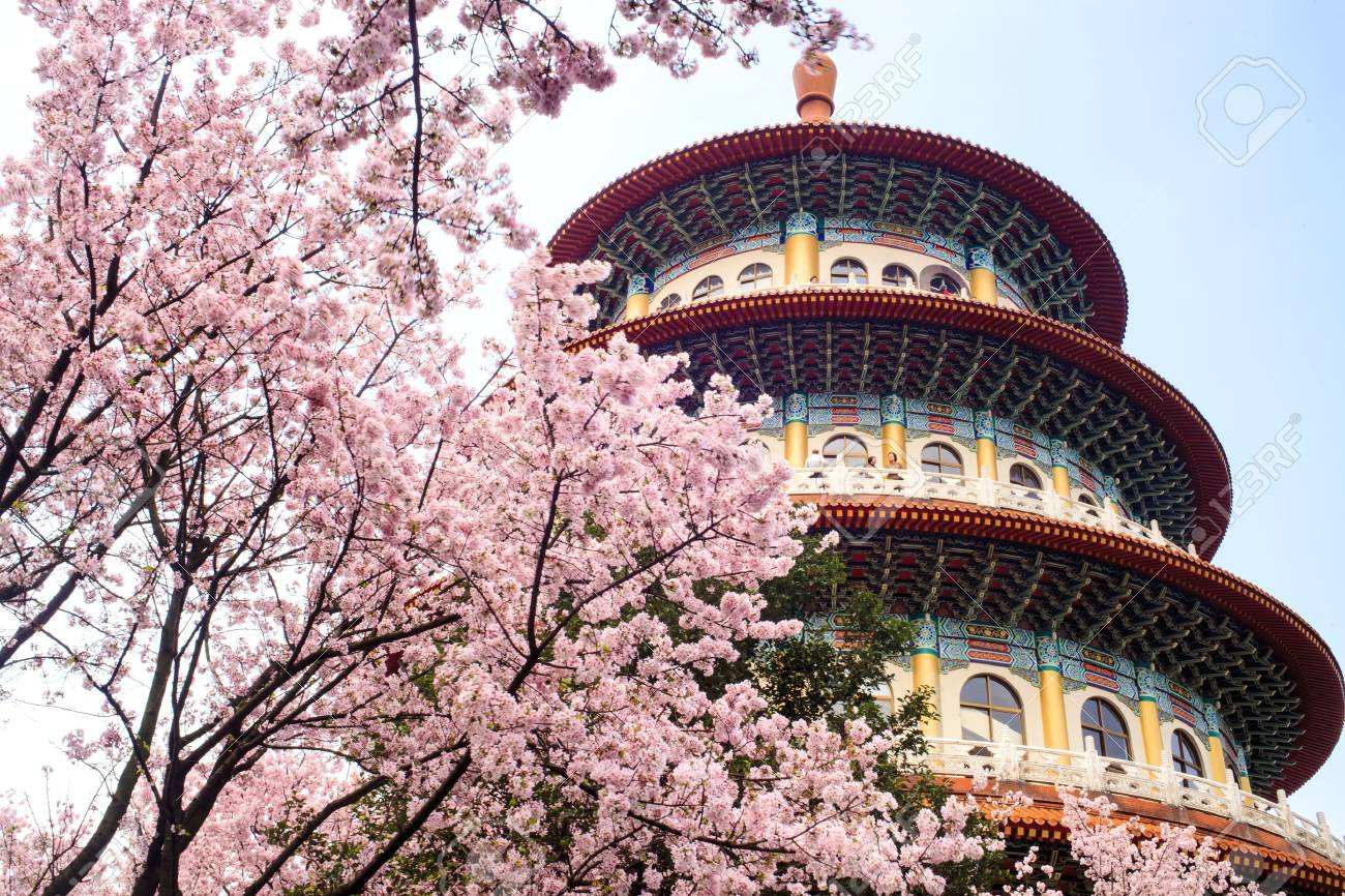 4D3N CHERRY BLOSSOM UNFORGETTABLE TAIWAN ALL IN