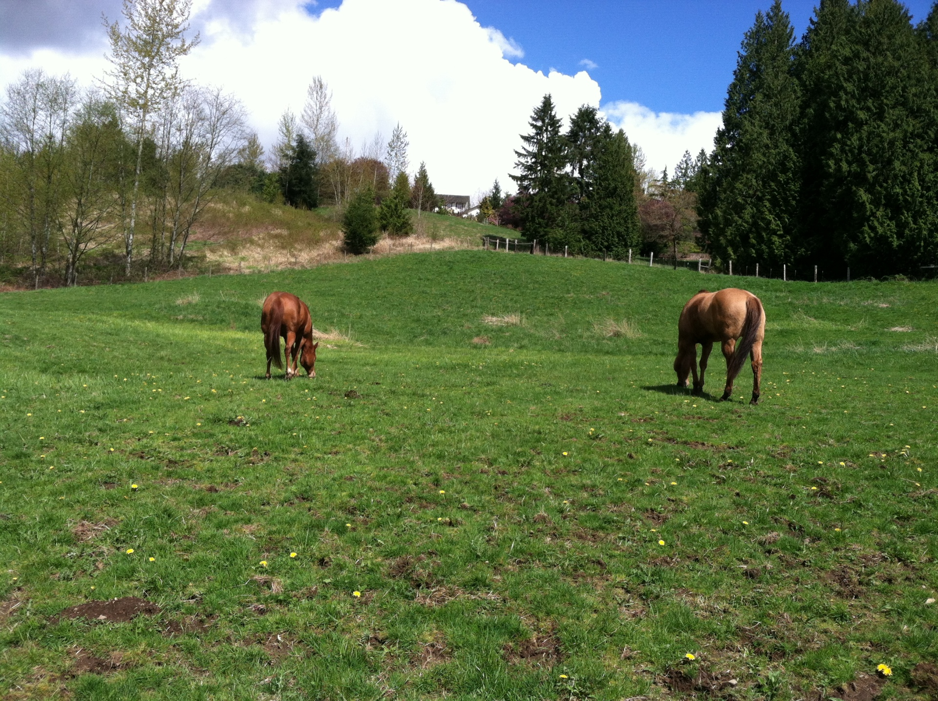 Ella and Zea grazing.