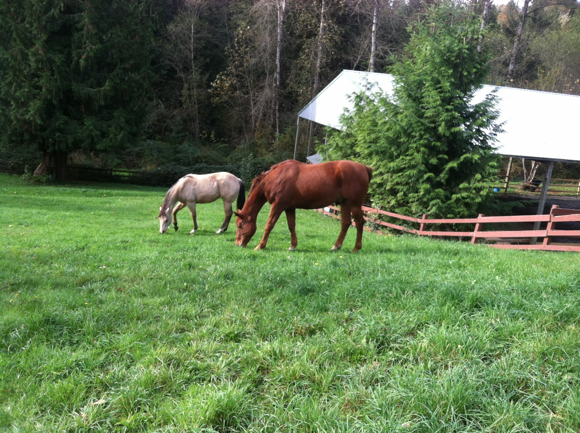 Ruth and Flip grazing.